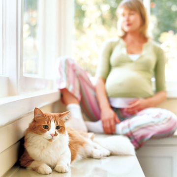 pregnant-woman-with-cat.jpg