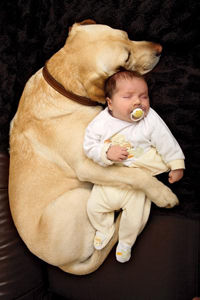 dogmeetsbaby_0.jpg