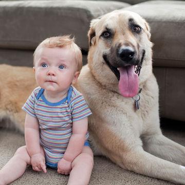 prepare-your-pet-dog-baby.jpg