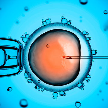First Baby Born with Help From Stem Cell IVF