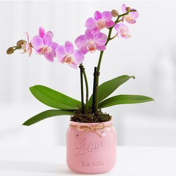 proflowers pink mini orchid