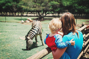 Mother Holding Baby At Zoo Watching Zebra